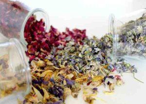 Pourquoi la naturopathie est une médecine traditionnelle ?