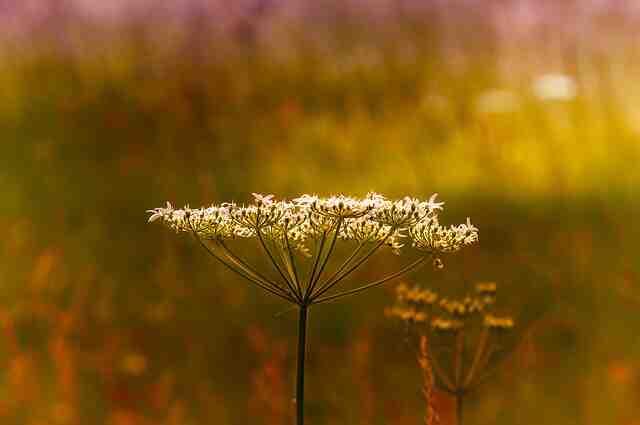 Quel est le rôle d'un naturopathe ?