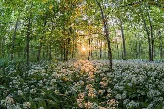 Quelle mutuelle rembourse la naturopathie ?