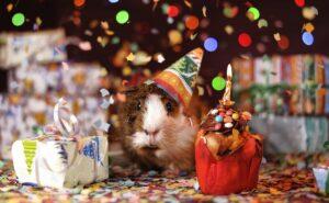 organiser la fête d'anniversaire d'un enfant